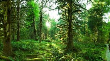 Cover_Picture_-_Forests1.jpg