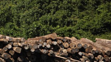 FLAG-Deforestation-Case-Studies-2.jpg