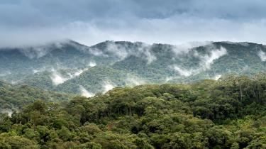 TripleLine-Forests-Climate-Change-3.jpg